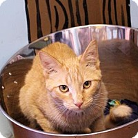 Adopt A Pet :: Sampson - West Des Moines, IA