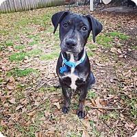 Adopt A Pet :: Jane - Houston, TX