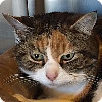 Adopt A Pet :: Gracie - Port Angeles, WA
