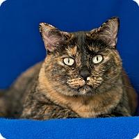 Adopt A Pet :: Zoey - Coronado, CA