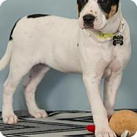 Adopt A Pet :: Ree - Berkeley Heights, NJ