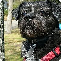 Adopt A Pet :: Wendy - Brattleboro, VT