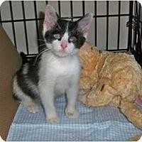 Adopt A Pet :: Popeye - Secaucus, NJ