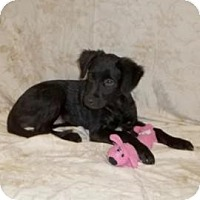 Adopt A Pet :: Chrissy (low adoption fee!) - South Jersey, NJ