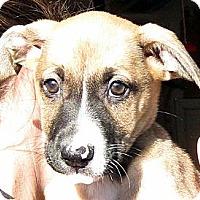 Adopt A Pet :: Baby Mistletoe - Oakley, CA