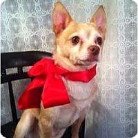 Adopt A Pet :: Scrappy - Cumberland, MD