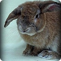 Adopt A Pet :: Vincent Bun Gogh - Williston, FL