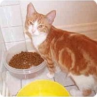 Adopt A Pet :: Rosie - San Ramon, CA