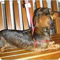 Adopt A Pet :: Starlet - Mooy, AL