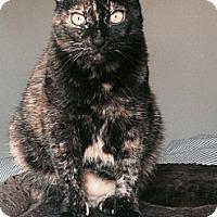 Adopt A Pet :: Rosie - Santa Monica, CA