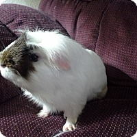 Adopt A Pet :: Elvis - San Antonio, TX