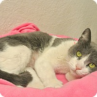Adopt A Pet :: Elsa - Foothill Ranch, CA