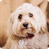 Adopt A Pet :: Biff - Portland, OR