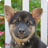 Adopt A Pet :: Charlotte von Calw - Thousand Oaks, CA
