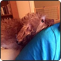 Adopt A Pet :: DAISY ANN - ADOPTION PENDING - Seymour, MO