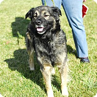 Adopt A Pet :: Precious - Detroit, MI