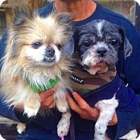 Adopt A Pet :: Inday & Bianca - Manhattan, NY