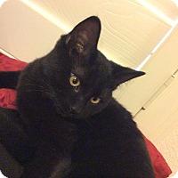 Adopt A Pet :: Tank - Scottsdale, AZ