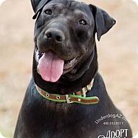 Adopt A Pet :: LIZA - Chandler, AZ