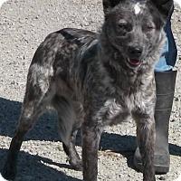 Adopt A Pet :: Sterling - Texico, IL