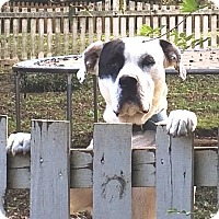 Adopt A Pet :: David - Barnesville, GA