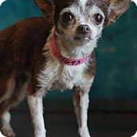 Adopt A Pet :: Cha Cha - Waldorf, MD