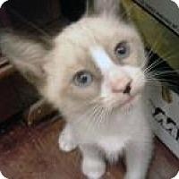 Adopt A Pet :: Sammy - Mission Viejo, CA