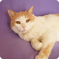 Adopt A Pet :: Rio - Colorado Springs, CO