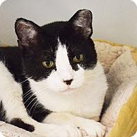 Adopt A Pet :: Theo - Lincoln, NE