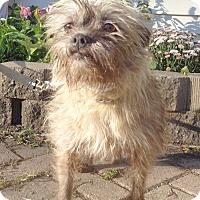 Adopt A Pet :: Maritha - West Chicago, IL