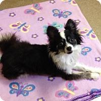 Adopt A Pet :: 1-8 Tito - Triadelphia, WV
