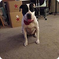 Adopt A Pet :: Rachel - Beverly Hills, CA