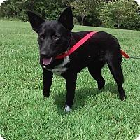 Adopt A Pet :: spike - Columbia, KY