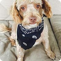 Adopt A Pet :: Andy - Wagoner, OK