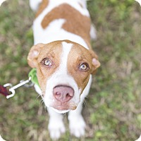 Adopt A Pet :: Mitchell - Houston, TX