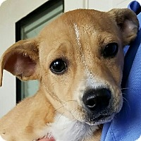 Adopt A Pet :: Charlie - Monrovia, CA
