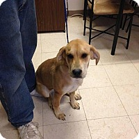 Adopt A Pet :: Ginger - Rexford, NY