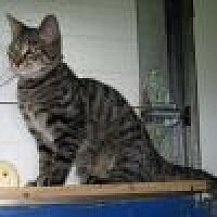 Adopt A Pet :: Hobson - Powell, OH