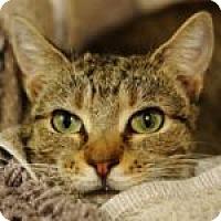 Adopt A Pet :: Ashton - Medford, MA