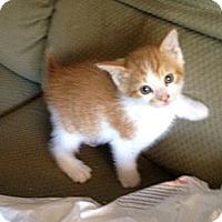 Adopt A Pet :: Gabriel - Xenia, OH