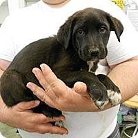 Adopt A Pet :: Tottie - Southampton, PA