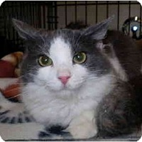 Adopt A Pet :: Rhonda Lee - San Ramon, CA
