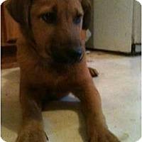 Adopt A Pet :: Bruno - Glastonbury, CT