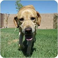 Adopt A Pet :: Dirk - Phoenix, AZ
