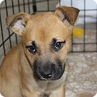 Adopt A Pet :: Baby Chip - Marlton, NJ