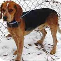Adopt A Pet :: Benson - Antioch, IL