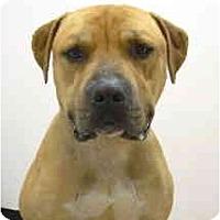 Adopt A Pet :: Cooper - Port Washington, NY