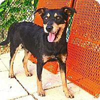 Adopt A Pet :: Gabby - Ft. Lauderdale, FL