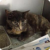 Adopt A Pet :: Daphne - Lancaster, VA