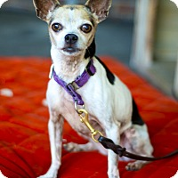 Adopt A Pet :: Little Adorable Teensy-VIDEO - Los Angeles, CA